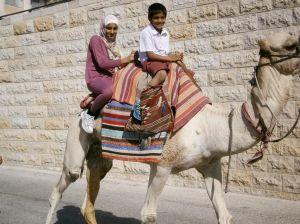 Gerusalemme - il Dromedario