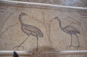 Tabgha - Mosaici -  Chiesa della moltiplicazione dei pani e dei pesci