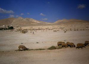 Deserto -